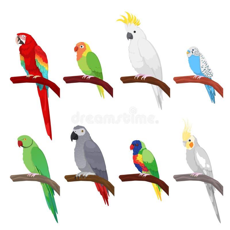 Tropikalna papuga Ustawiająca Odizolowywającą na Białym tle ilustracji