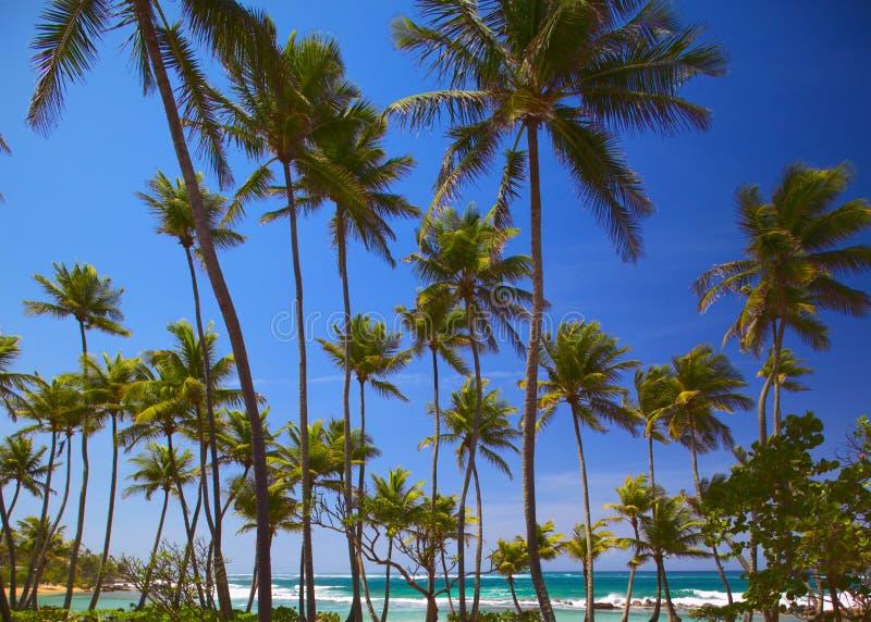 tropikalna plażowa egzotyczna scena zdjęcia stock