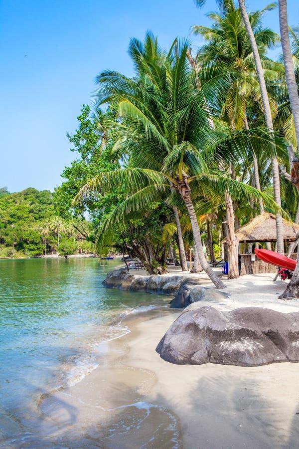 tropikalna plażowa kokosowa palma obrazy royalty free