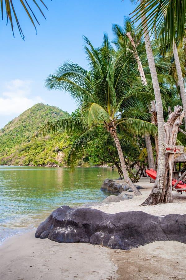 tropikalna plażowa kokosowa palma obraz royalty free