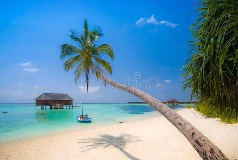 tropikalna plażowa sceneria zdjęcia royalty free