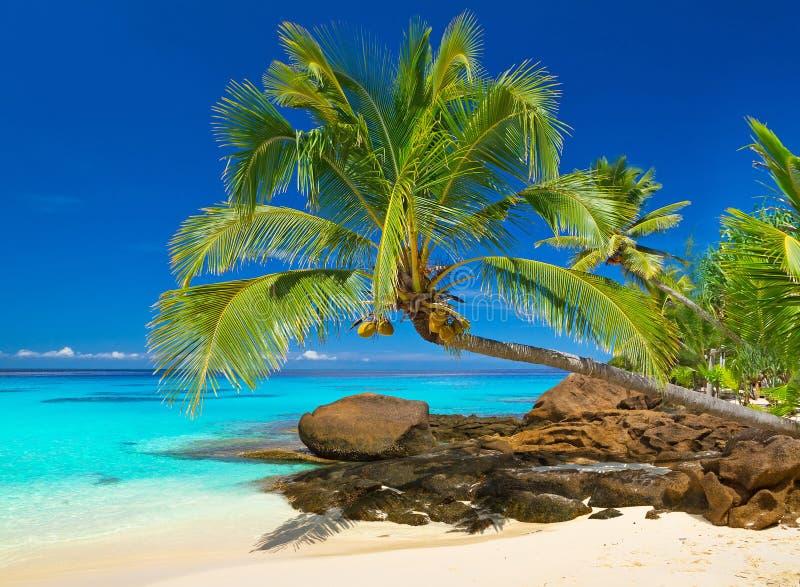 Tropikalna plażowa sceneria w Tajlandia zdjęcie stock