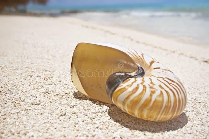 tropikalna plażowa skorupa zdjęcie stock
