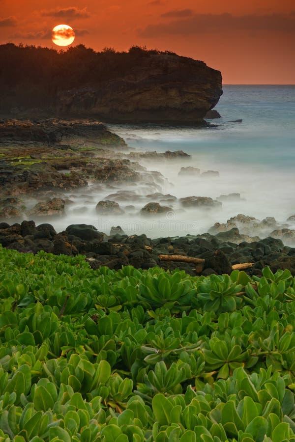 Download Tropikalna Plaża zdjęcie stock. Obraz złożonej z idylliczny - 27224976