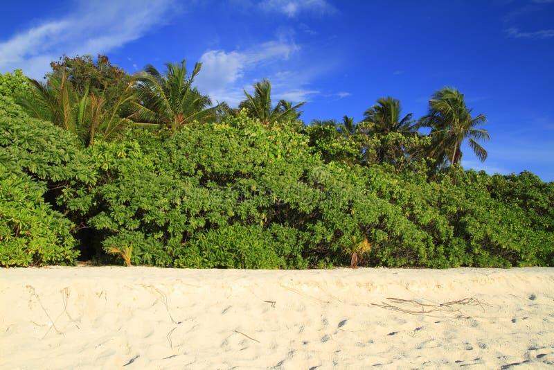 Download Tropikalna plaża obraz stock. Obraz złożonej z piasek - 32905629