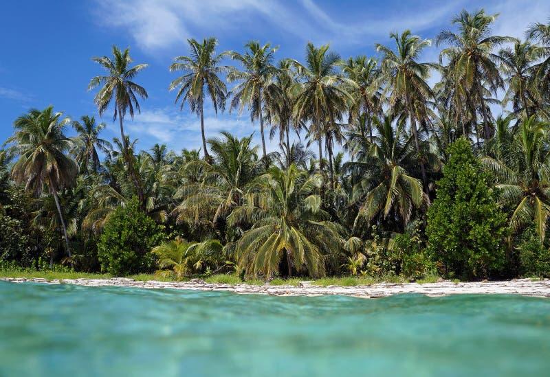 Download Tropikalna Plaża Od Wody Powierzchni Zdjęcie Stock - Obraz złożonej z koks, costar: 28963894