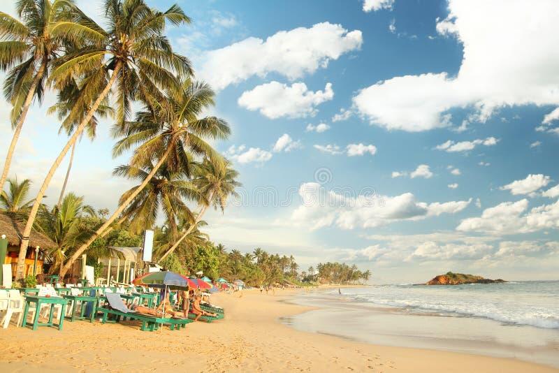 Tropikalna raj plaża z kokosowymi drzewami obraz stock