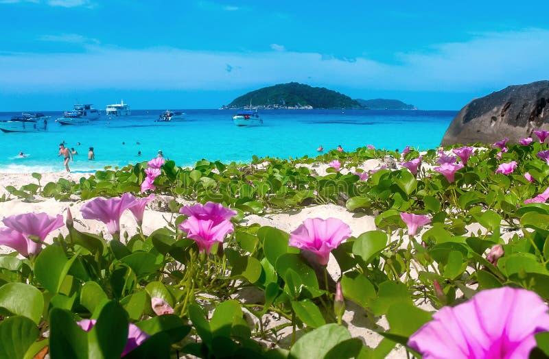 Tropikalna raj wyspa z białą piasek plażą, purpurami i kwitnie obraz stock