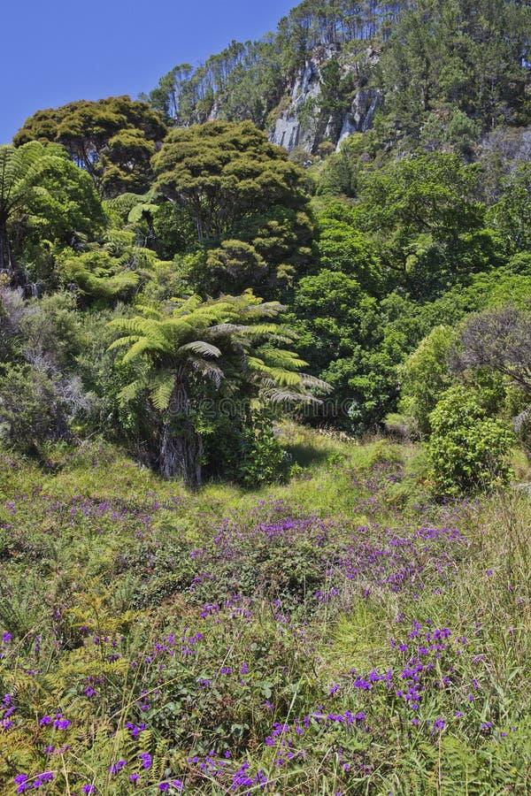 Tropikalna roślinność blisko Katedralnej zatoczki zdjęcie royalty free