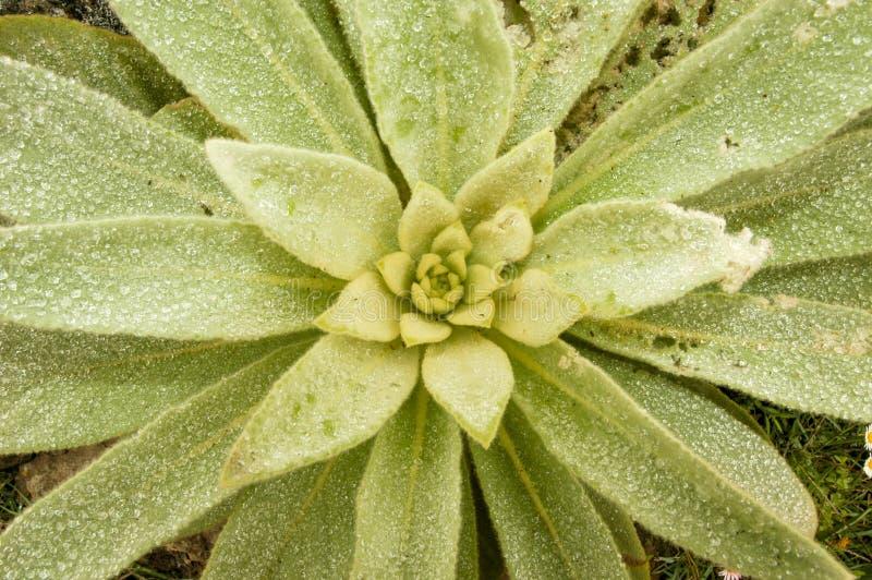 Tropikalna roślinność w losu angeles spotkania wyspie zdjęcie royalty free