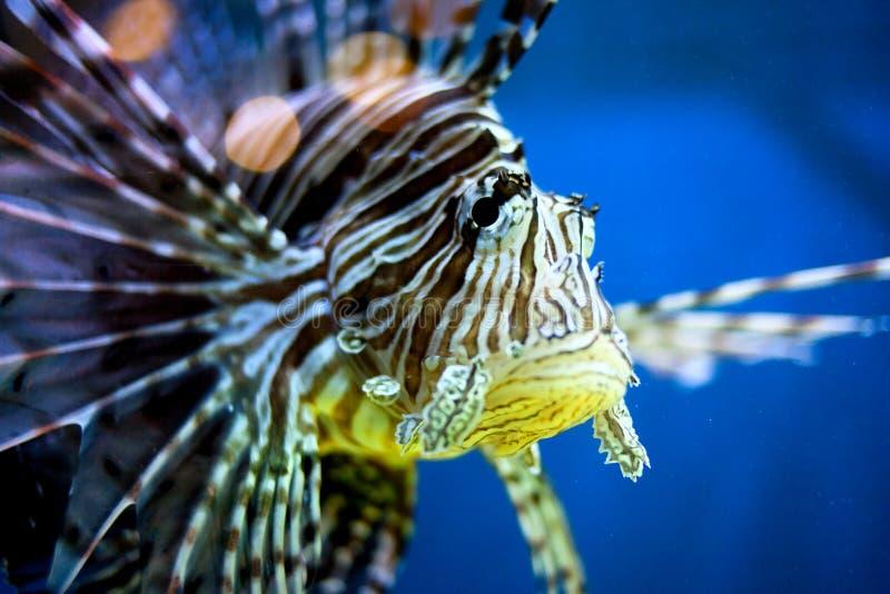 Download Tropikalna ryba obraz stock. Obraz złożonej z świeży - 27333205