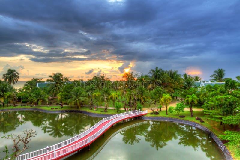 Tropikalna sceneria drzewka palmowe przy zmierzchem obrazy stock