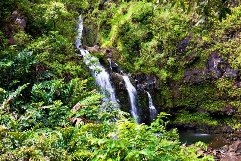 tropikalna siklawa zdjęcie stock