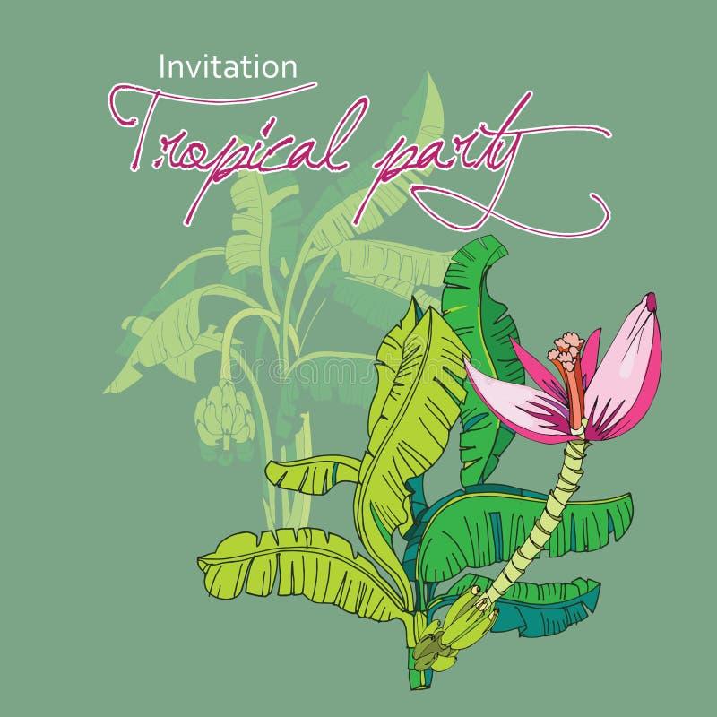 tropikalna t?o palma zdjęcia royalty free