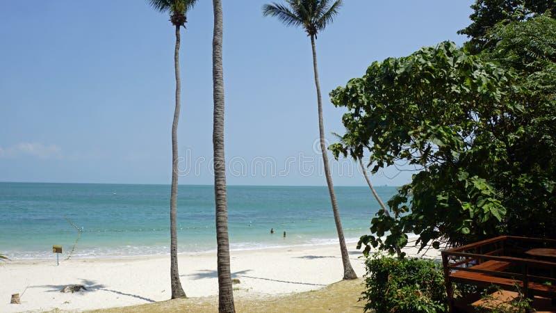 tropikalna wua ta podołka wyspa w Thailand zdjęcie royalty free