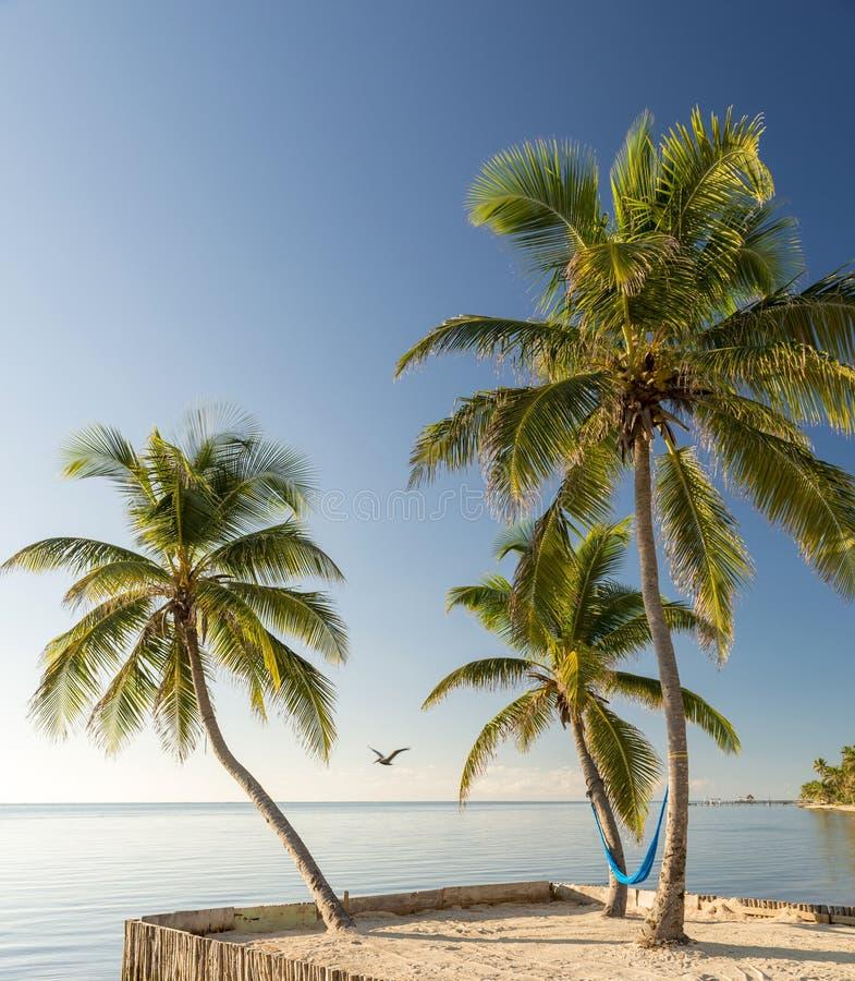 Tropikalna wyspy plaża Z hamakiem zdjęcia stock