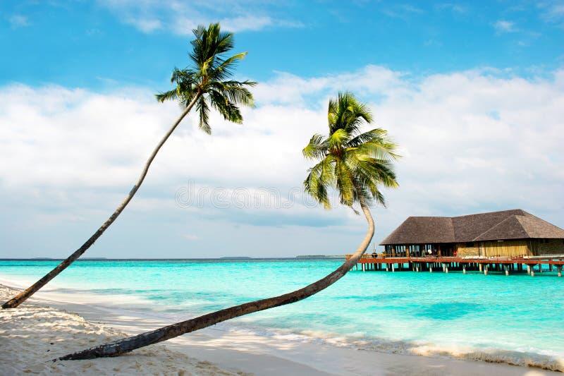 tropikalna wyspy plażowa palma fotografia royalty free
