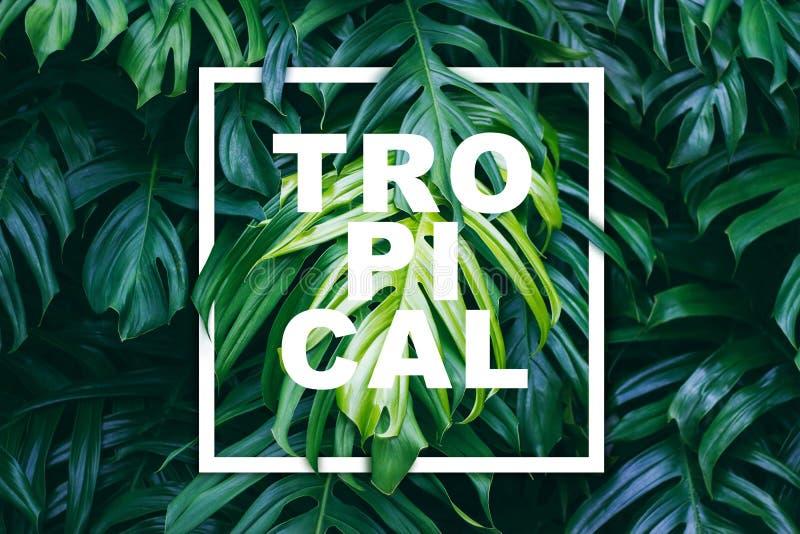 Tropikalna zieleń opuszcza z bielu tekstem i ramą royalty ilustracja