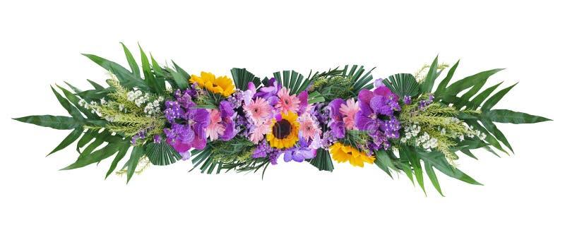 Tropikalna zielona ulistnienie roślina opuszcza z kolorowym kwiatu kwiecistego przygotowania natury krzaka tłem odizolowywającym  obraz royalty free