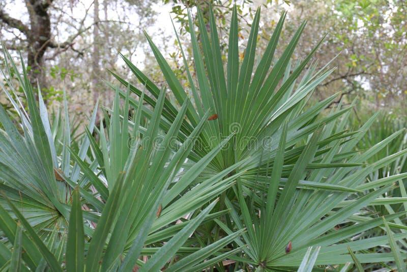 Tropikalne boczni palmy w wczesnym poranku obrazy royalty free
