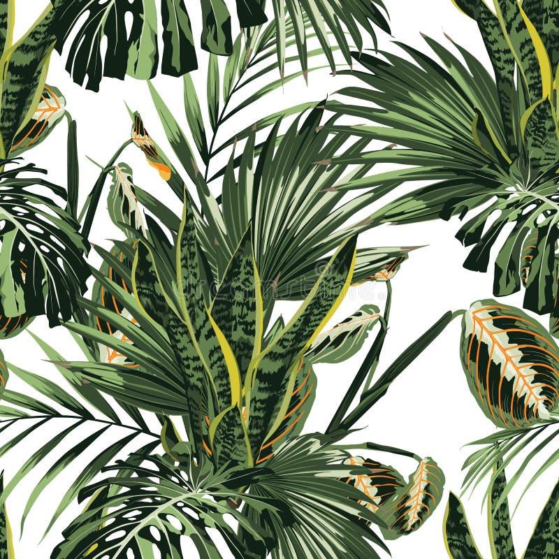 Tropikalne dżungli rośliny, sansevieria i palma liście na białym tle, royalty ilustracja