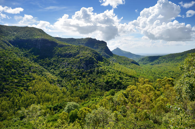 Tropikalne dżungle Mauritius wyspa fotografia royalty free