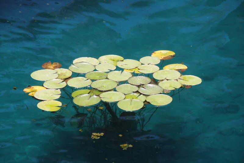 Tropikalne jezioro rośliny fotografia royalty free