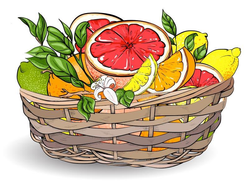Tropikalne owoc w łozinowym koszu ilustracji