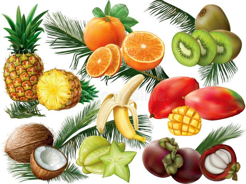 Tropikalne owoc z palmowymi liśćmi zdjęcia stock