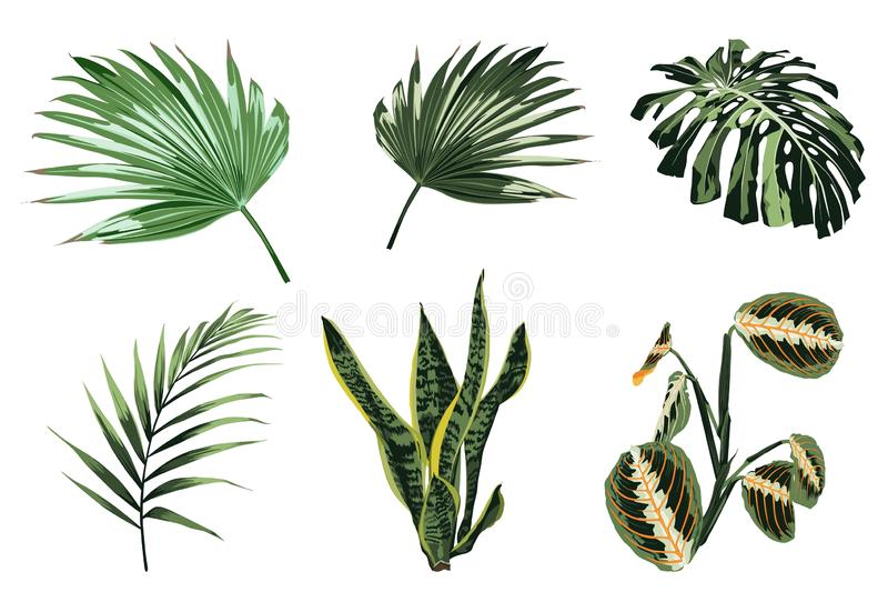 Tropikalne rośliny, liście i palmy ustawiający, Egzotyczne ilustracje, kwieciści elementy odizolowywający, Hawajski bukiet ilustracja wektor