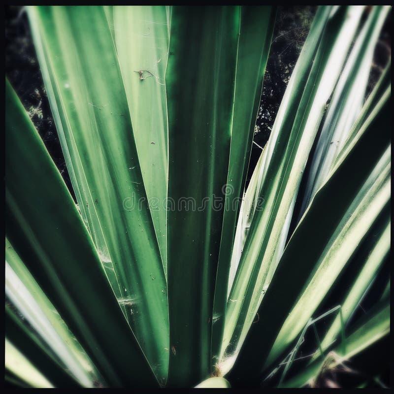tropikalne rośliny obraz stock