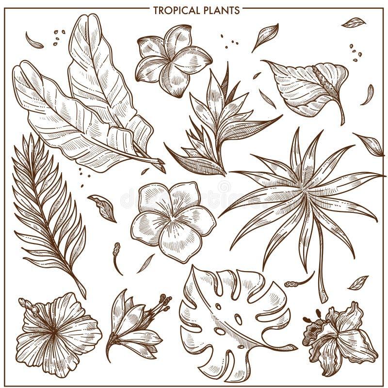 Tropikalne rośliny i egzotyczni kwiaty kreślą wektor odizolowywającą ikona ustawiającą kolekcję ilustracja wektor