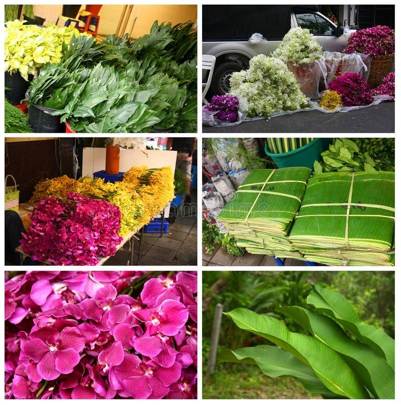Tropikalne rośliny i kwiaty zdjęcie royalty free