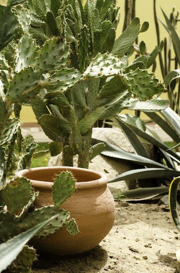 Tropikalne rośliny które r w Afryka obraz stock