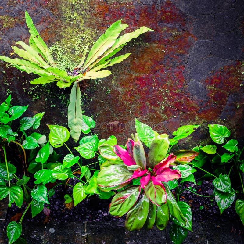 Tropikalne rośliny przy mechatą ścianą obraz royalty free