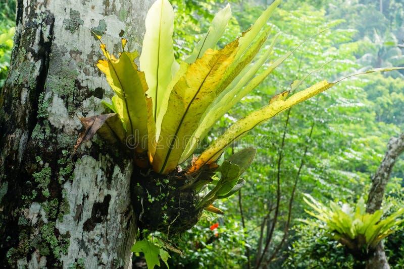 Tropikalne rośliny r przy tropikalnym lasem deszczowym zdjęcie royalty free