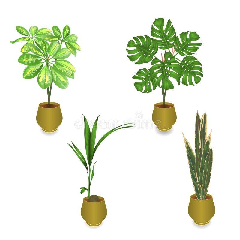 Tropikalne rośliny w garnka Schefflera filodendronu palmie - kokosowy Sansevieria na białym tle ustawia jeden rocznika wektor ja royalty ilustracja