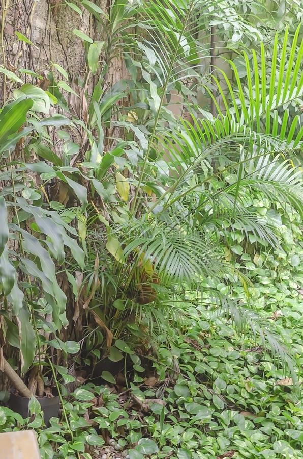 tropikalne rośliny z greenery i radiantów kolory przy stopą ściana kolonialne skały fotografia stock