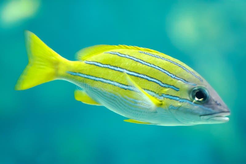 tropikalne ryby obrazy royalty free