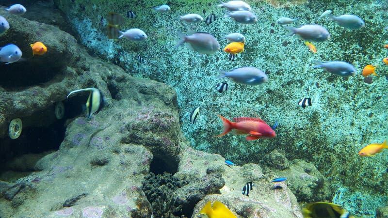 tropikalne ryby korali obraz royalty free