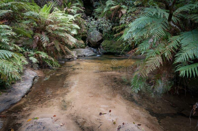 Tropikalnego lasu deszczowego krajobraz z wodnym basenem otaczaj?cym zielonymi paprociami obraz royalty free