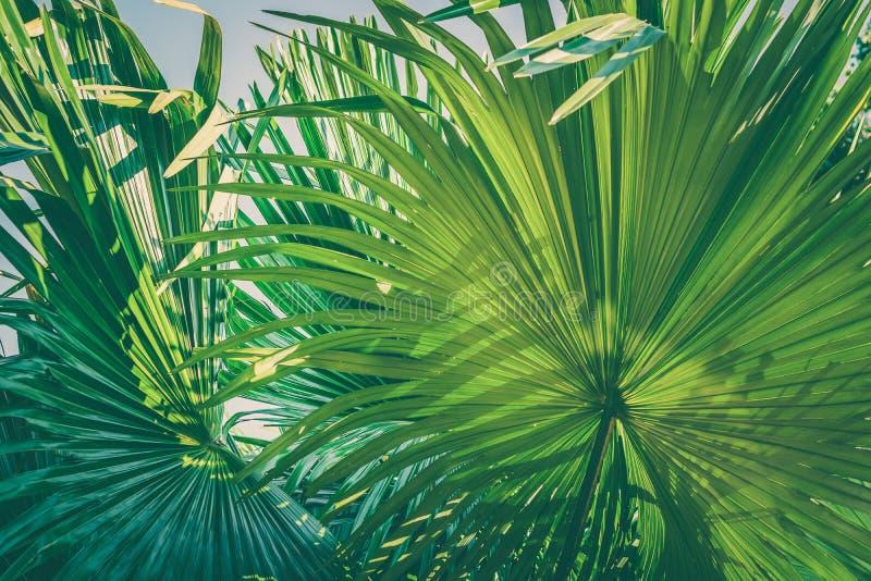 Tropikalnego Palmowego liścia tekstury tła koloru natury tła Ciemnozielony retro projekt obraz royalty free