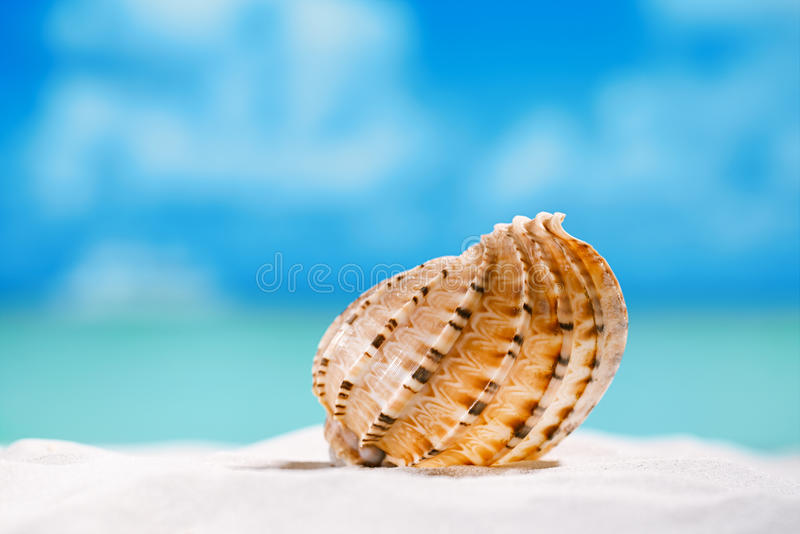 Tropikalnego seashell denna skorupa z oceanem, plażą i seascape, fotografia royalty free