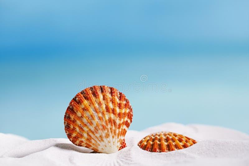 Tropikalnego seashell denna skorupa z oceanem, plażą i seascape, obraz royalty free