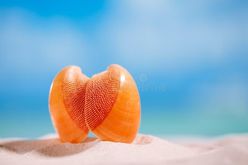 Tropikalnego seashell denna skorupa z oceanem, plażą i seascape, zdjęcie stock