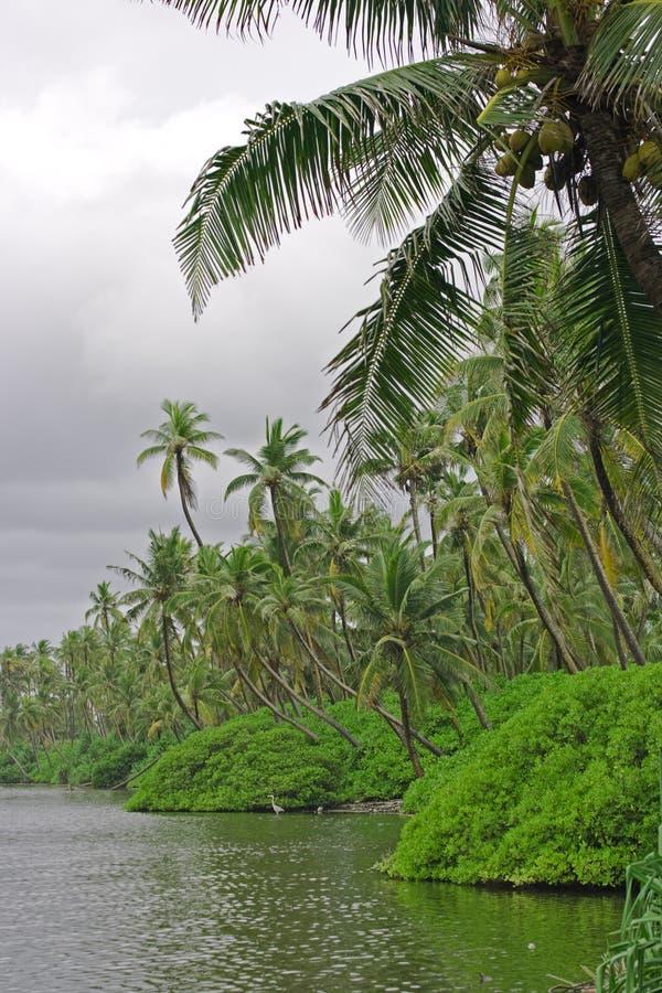 tropikalnej dżungli zdjęcie royalty free
