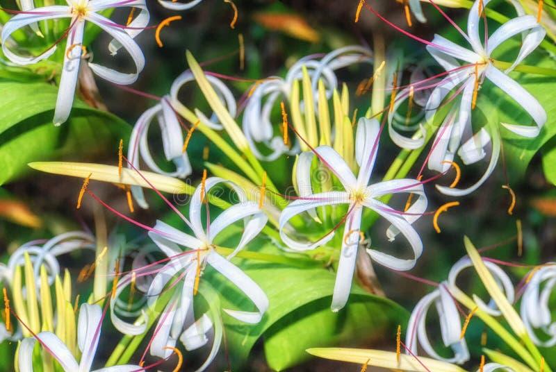 Tropikalnej rośliny bagna leluja fotografia stock