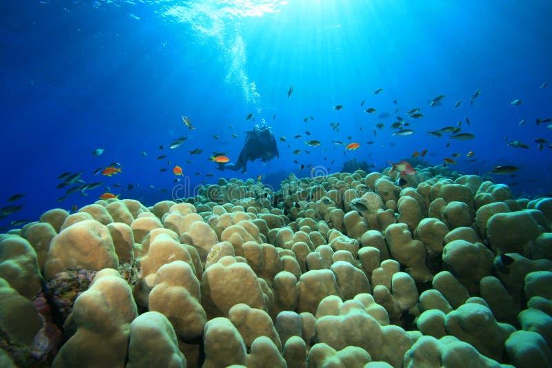 tropikalni akwalungów nurkowi morza fotografia royalty free