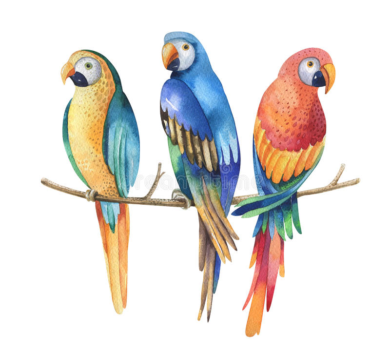 Tropikalni akwarela ptaki odizolowywający na białym tle Ary p ilustracja wektor