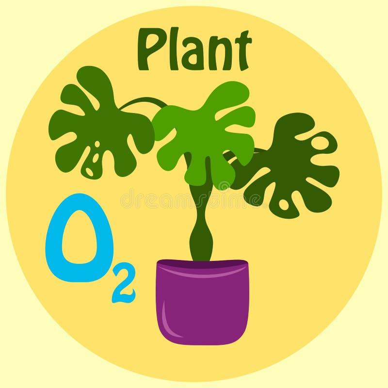 Tropikalni ciemnozieleni liście odizolowywający na żółtym tle monstera Liścia filodendron Domowej dżungli salowa doniczkowa rośli ilustracji